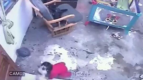 В Колумбии кот спас малыша от падения с лестницы