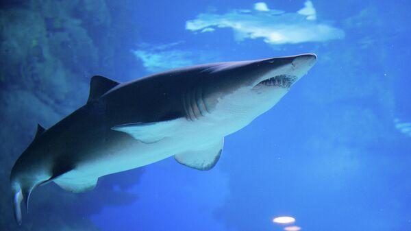 В Великобритании ученые нашли пластик в кишечнике глубоководных акул