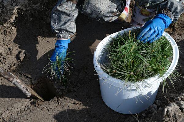 Акция Всероссийский день посадки леса в Новосибирской области