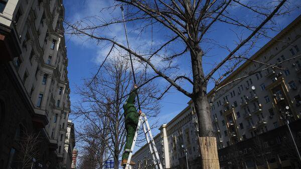 Работник коммунальной службы обрезает ветки дерева на Тверской улице в Москве