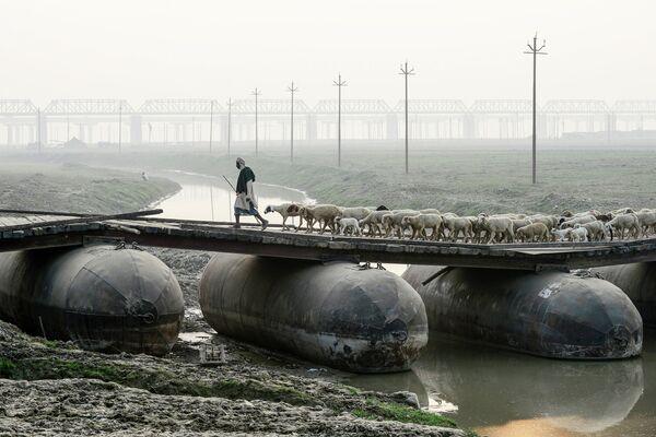 Пастух ведет стадо овец на понтонном мосту в Аллахабаде