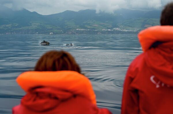 Туристы смотрят на дельфинов во время экскурсии Наблюдение за китами на острове Сан-Мигель