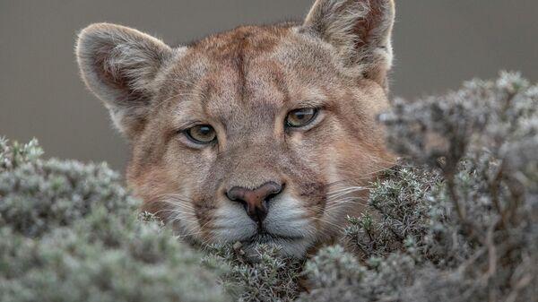 Ingo Ardnt. Шортлист Wildlife Photographer of the Year LUMIX People's Choice Award