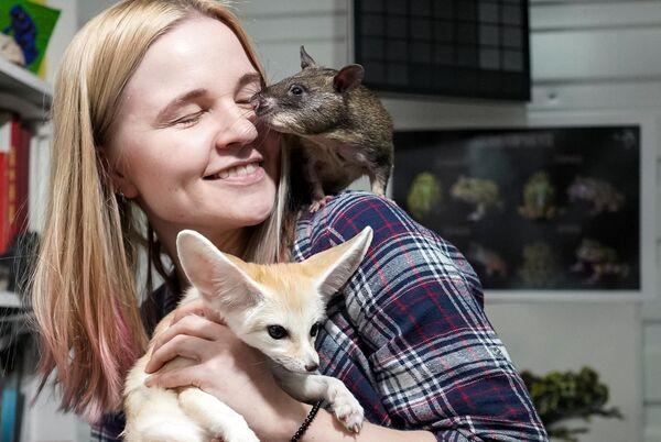 Жена зоолога Евгения Рыбалтовского - Марина с Гигантской крысой Гамби (гигансткая гамбийская хомяковая крыса) и миниатюрной лисицей (феньком) в городе Всеволожске Ленинградской области