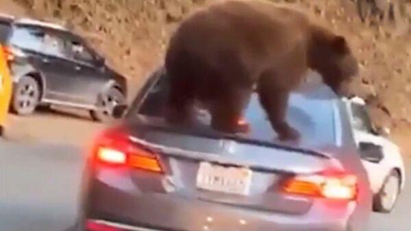 Медведь запрыгнул на автомобиль в Национальном парке Секвойя и Кингз-Каньон. Стоп-кадр из видео