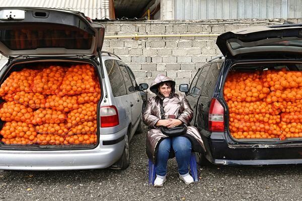 Торговля мандаринами из Абхазии около границы на улице Урожайной в Сочи