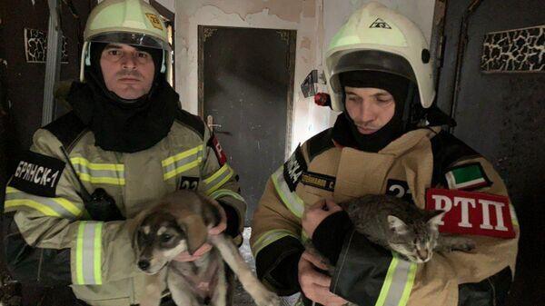 В Грозном при пожаре в приюте сотрудники МЧС спасли более 170 кошек и собак