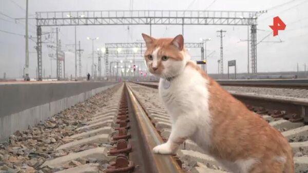 Кот проинспектировал Крымский мост