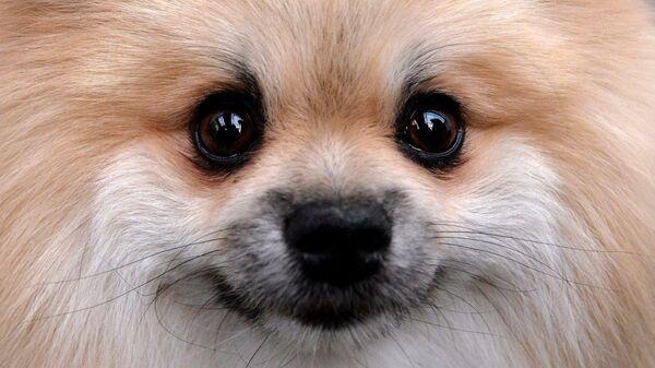 Гав! О чем молчит ваша собака