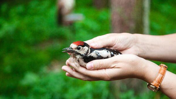 От спасения вороны до создания Центра реабилитации диких птиц