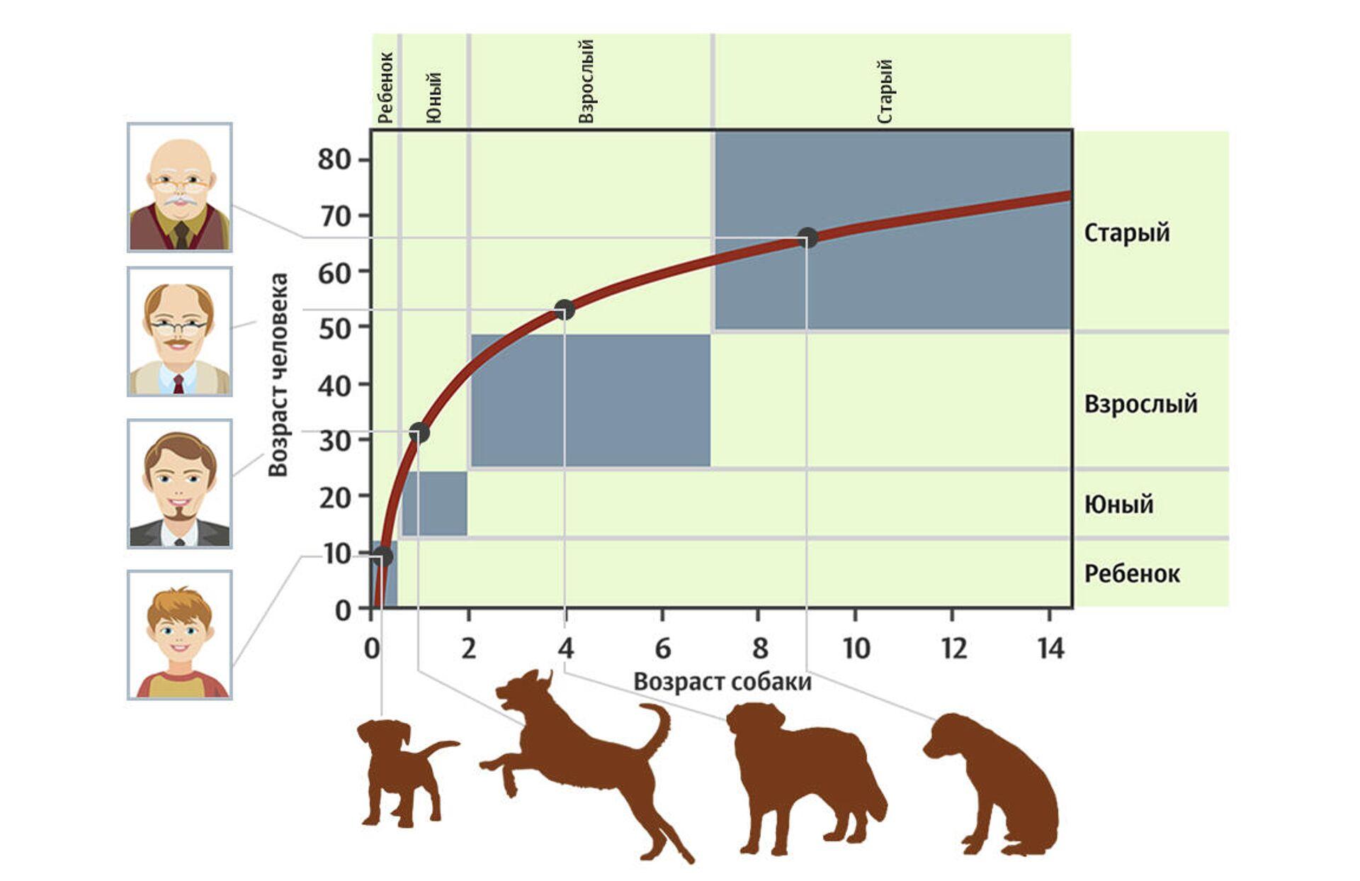 Расчет биологического возраста собаки в человеческих годах - РИА Новости, 1920, 25.09.2020