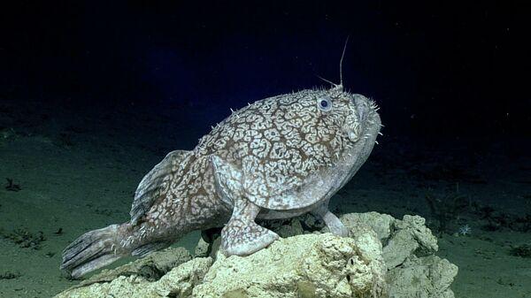 Не выплыл рожей: морские чудища с человеческими чертами покоряют сеть