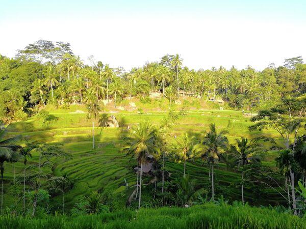 Рисовые террасы на Бали