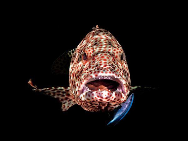 Ferenc Lorincz. Работа победителя конкурса 2019 Ocean Art Underwater Photo Competition