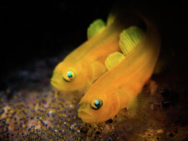 Stan Chen. Работа победителя конкурса 2019 Ocean Art Underwater Photo Competition