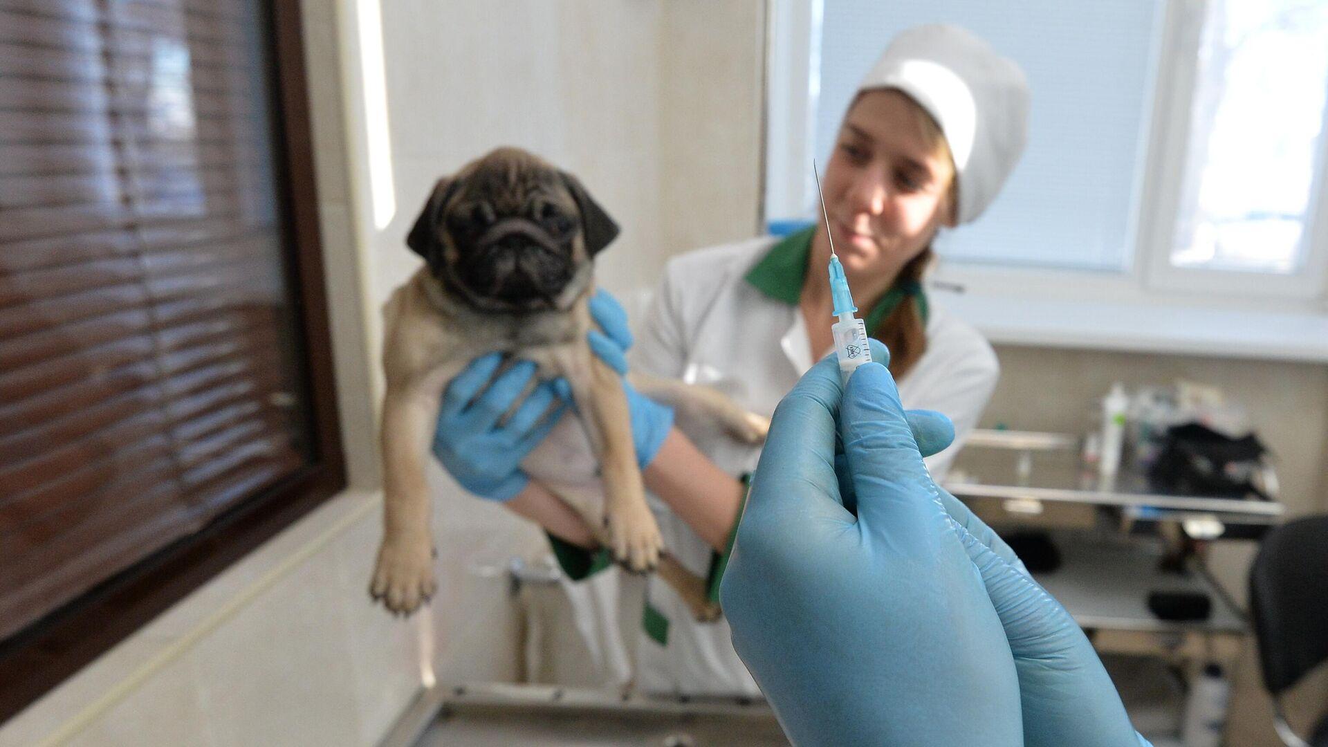 Ветеринары выполняют медицинские процедуры с собакой - РИА Новости, 1920, 24.09.2020