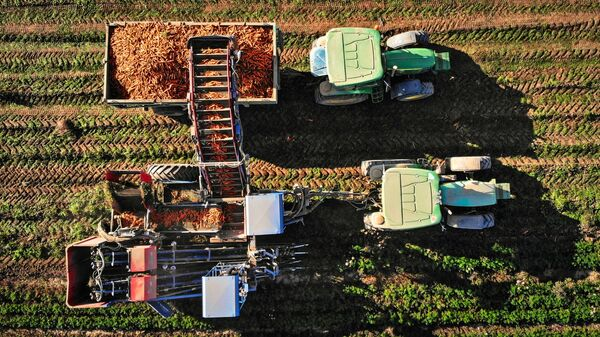 Уборка урожая моркови в Кабардино-Балкарии