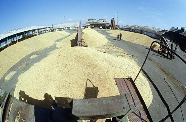 Урожай зерна на элеваторе