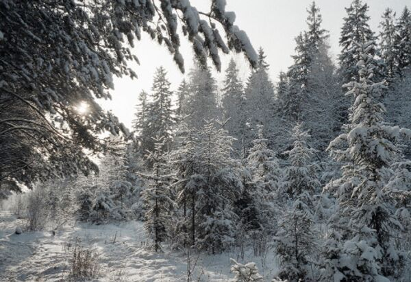 Глава Химок откажется от обещания не строить дорогу через лес - эколог