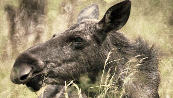 Омбудсмен Украины отвергает обвинения в браконьерстве