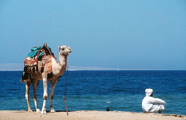На берегу Красного моря в Египте. Архив