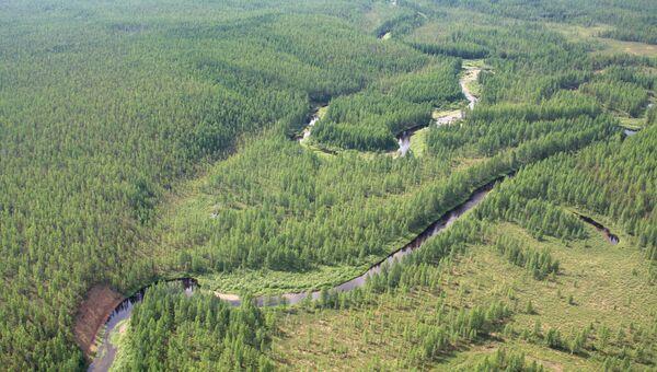Все наши леса принадлежат государству. Так же, как, между прочим, и в США. Только наши бизнесмены получают под вырубку гектары по сказочно низким ценам, а продают по мировым.