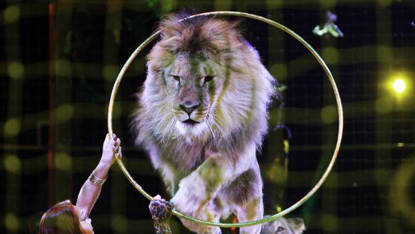 Лев в цирке. Архив