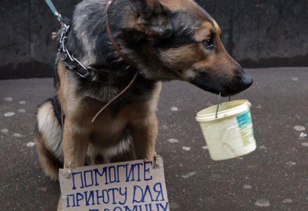 Сбор денег для приюта для бездомных собак. Архивное фото