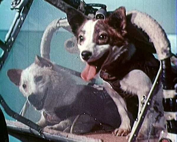 Белку и Стрелку готовили к полету в космос целый год