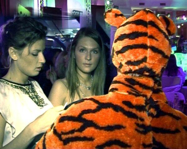Человекотигр в городе: хищник в ночном клубе