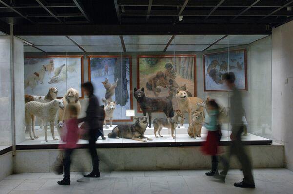Посетители в Дарвиновском музее