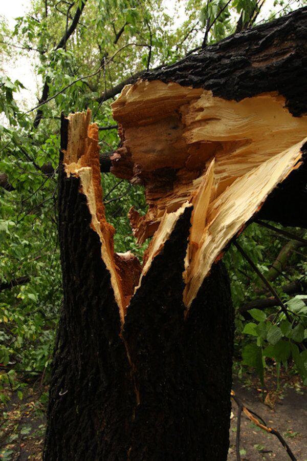 Последствия урагана в районе Соколиная гора