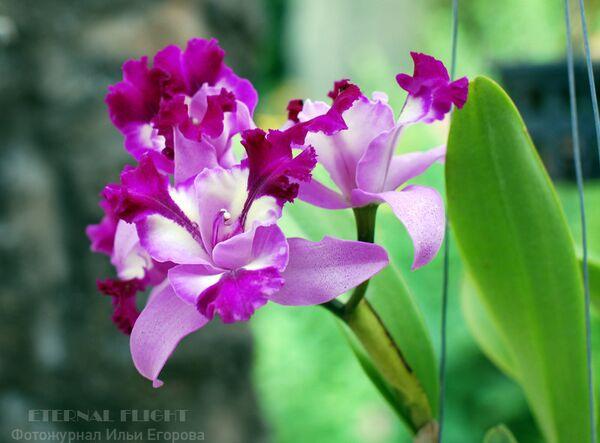 Тайский сад Нонг-Нуч