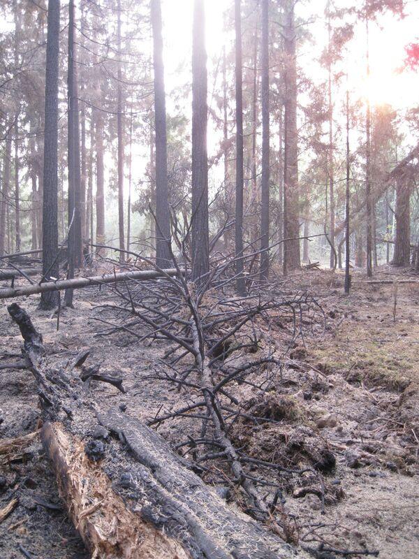 Последствия пожаров во Владимирской области