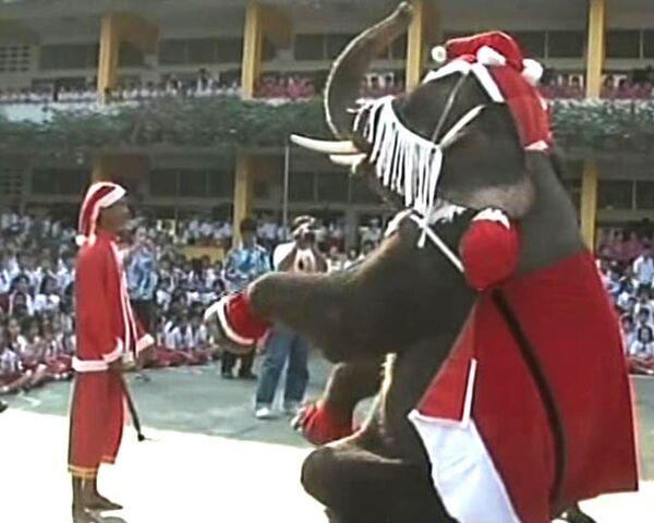Слоны в костюмах Санта Клауса исполнили рождественский танец
