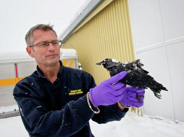 Десятки мертвых птиц обнаружены на юго-западе Швеции