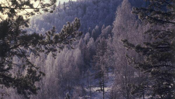 Зимнее утро в Саянах
