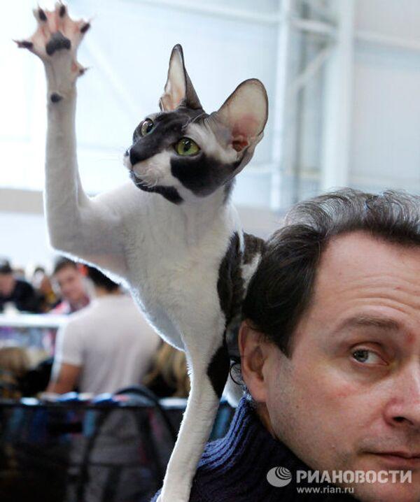 Международная выставка кошек КЭТСБУРГ-2011