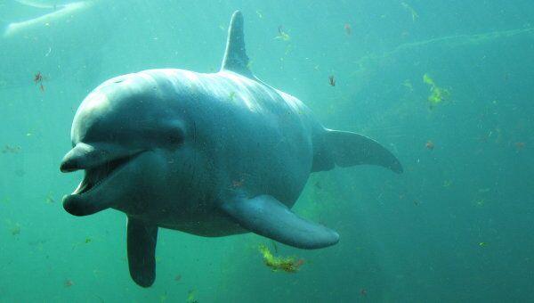 Почему умер дельфин в Московском дельфинарии? Версии