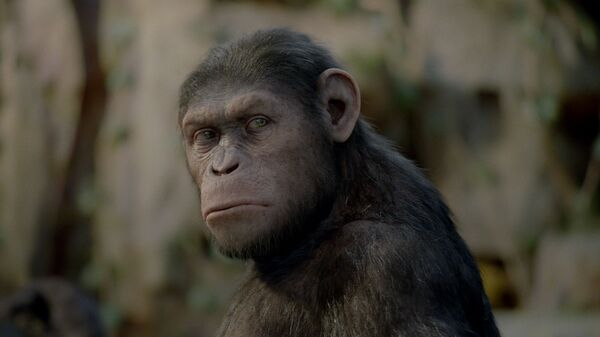 Кадр из фильма Восстание планеты обезьян