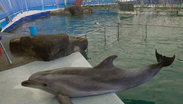 Выступление дельфинов в дельфинарии Московского Зоопарка