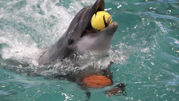 В дельфинарии, фото из архива