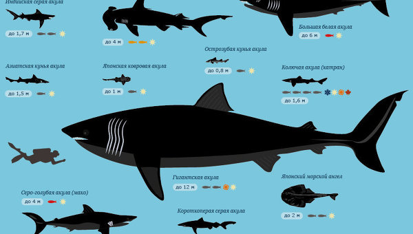 Все акулы Приморья