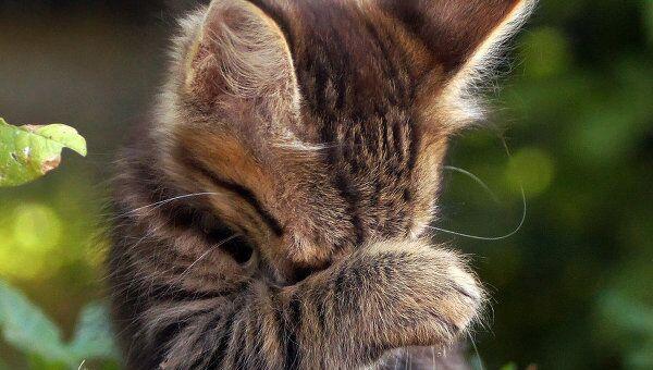 Котенок. Архив