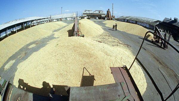 Урожай зерна в Госплемзаводе Масловский