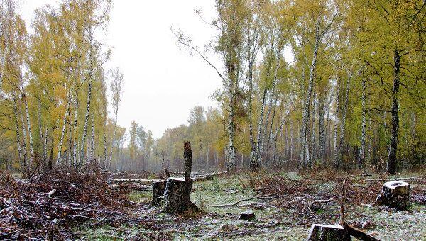 Химкинский лес. Архивное фото