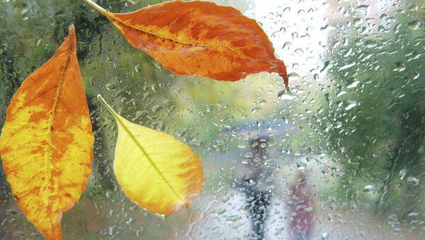 Дождливая осень. Архивное фото