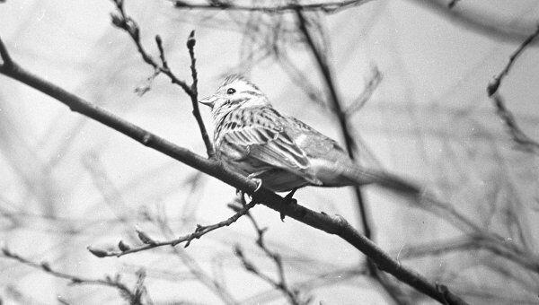 Птица. Архив