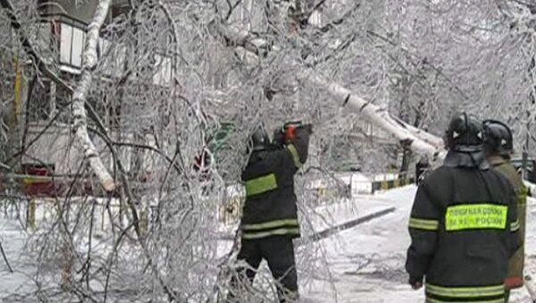Обледеневшие береза и бетонный столб рухнули на востоке Москвы