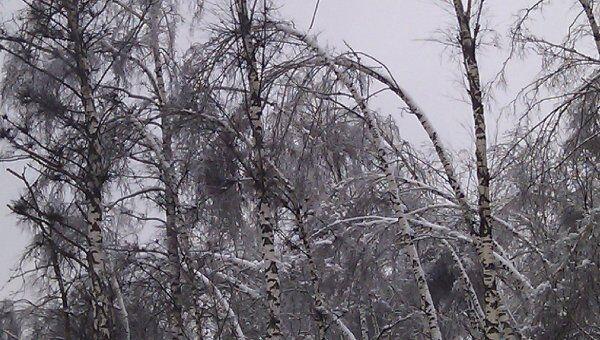 Последствия ледяного дождя. Архив